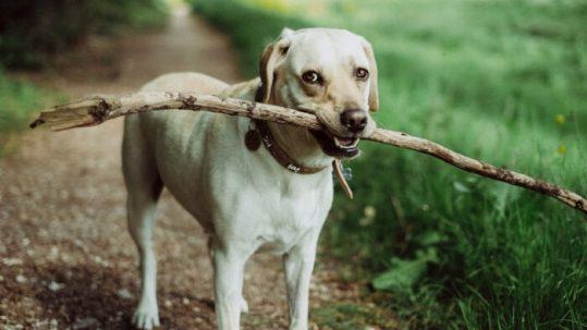 Huesos y snacks naturales para premiar a nuestro perro