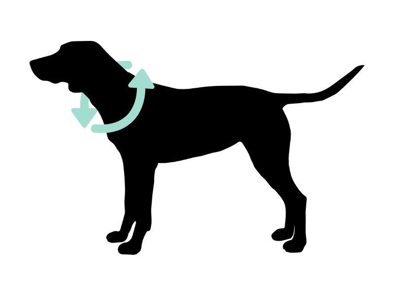 como medir el cuello de nuestro perro
