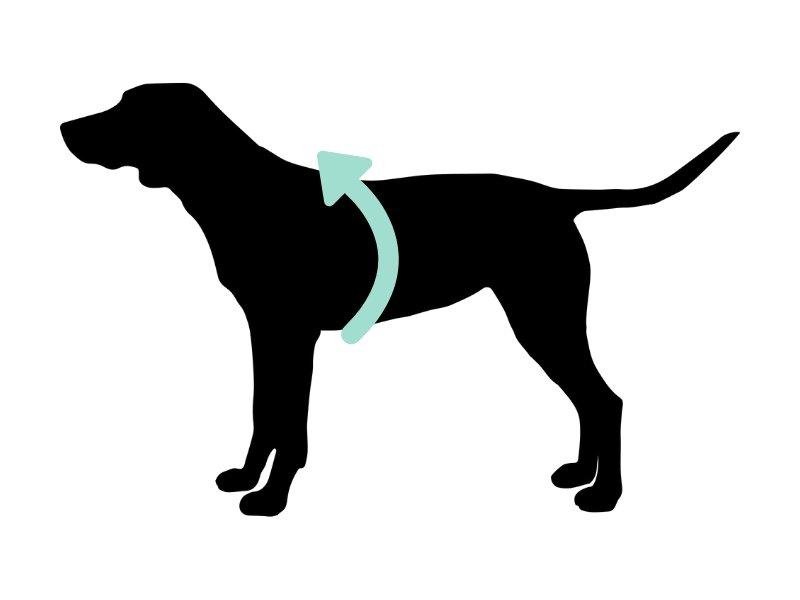 como medir el contorno perro